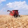 Minivacaciones atragantadas: en unos pocos días el maíz dejó de ser negocio para los productores sin coberturas