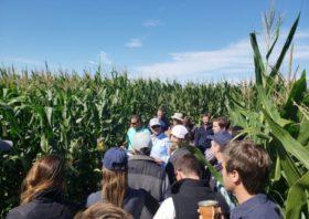 Guía para elegir híbridos de maíz en Entre Ríos