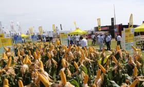 La cantidad de nuevas semillas de maíz inscriptas no pudo aún superar las cifras del último tramo del gobierno kirchnerista