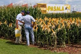Gracias Macri: sin retenciones a la soja sería imposible el resurgimiento del maíz