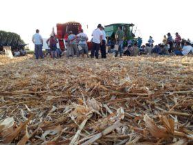 No hay mal que por bien no venga: otra manera de analizar la situación del maíz temprano