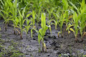 Seguirán las lluvias intermitentes en el norte del país: el domingo se esperan tormentas en el sur de la región pampeana