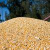 Unificaron en una sola resolución los requisitos vigentes para registrar exportaciones de productos agroindustriales