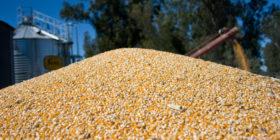 """Para tomar nota: los cereales """"salvaron"""" las exportaciones argentinas de bienes en el primer mes del año"""