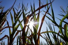A rezar: en los próximos días no se prevén lluvias importantes en el sector sur de la región pampeana