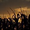 La campaña gruesa 2013/14 en riesgo: se vienen varios días sin lluvias en la región pampeana