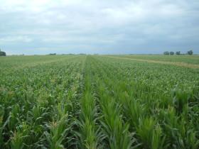 Récord total: en apenas dos semanas los productores argentinos vendieron 8,60 millones de toneladas de la cosecha 2019/20