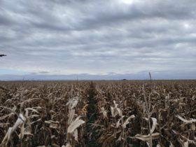 Esta semana se vienen varios días del mal tiempo que complicarán las tareas agrícolas