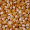 Película de terror: el precio de exportación del maíz pisingallo argentino cayó al nivel más bajo desde fines de 2010