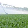 Extienden por tiempo indeterminado la prohibición de producción de semilla de maíz en el norte de San Luis para evitar la propagación de Diatraea resistente