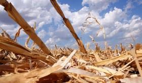 """La """"primaverita"""" del maíz duró apenas un día: los grandes exportadores se retiraron del mercado al cubrir casi todo el cupo adicional del cereal"""