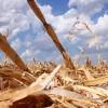 El gobierno perdió más de 10 millones de dólares por no habilitar un primer tramo del cupo de maíz 2013/14