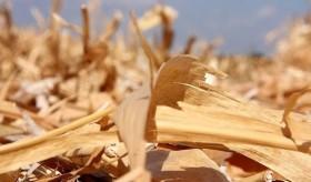 Cambio climático: un estudio del gobierno nacional asegura que el cultivo de maíz contribuye a reducir las emisiones de gases de efecto invernadero
