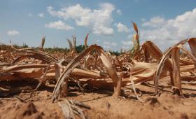Un premio para intentar evitar que la siembra se desplome: la retención efectiva del maíz 2013/14 es del 15%