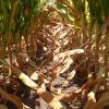 Se complica la seca en el sector sur de la zona pampeana: esta semana habrá una nueva oportunidad de lluvias