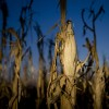 Alerta: la suba de los precios de los granos podría ser restringida por factores políticos