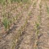 Análisis retrospectivo: los productores argentinos no fueron alertados a tiempo del desastre climático que ahora padecen