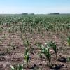 A rezar: siguen sin aparecer perspectivas de lluvias importantes en el sur de la región pampeana