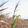 Otra semana de lluvias desiguales: mucho para los que ya no las necesitan y poco para los campos con déficits hídricos