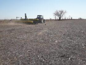 Siguen sin aparecer perspectivas de precipitaciones en las zonas agrícolas necesitadas de agua