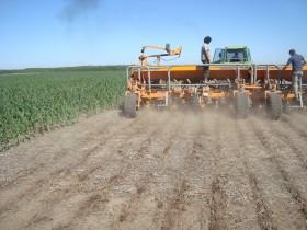 Se vienen días ideales para terminar de sembrar la gruesa en la región pampeana: seguirán los chaparrones en el NOA