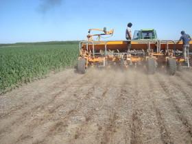 El primer tiempo del partido del maíz está perdido: ahora todas las fichas están puestas en los planteos tardíos