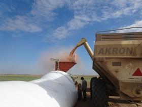 El cepo exportador ya no funciona para asegurar la disponibilidad de maíz barato: sólo restringe el ingreso de divisas