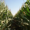 Se viene una negociación durísima: la tarifa orientativa de cosecha gruesa aumentó un 21% en el último año