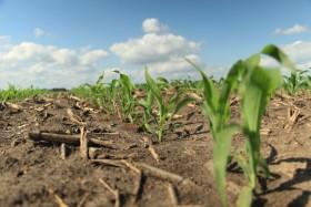 """Llegó el """"mercado climático"""" estadounidense: operadores especulativos ahora están mucho más pesimistas en soja que en maíz"""