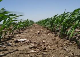 En lo que queda de la semana el mal tiempo se localizará en el norte del país: no habrá sobresaltos en la región pampeana