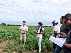 Emergencia agronómica: el yuyo colorado ya colonizó todas las regiones agrícolas argentinas
