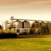 No siempre valor agregado es agregado de valor: en la actual coyuntura es más conveniente exportar cebada cervecera que malta