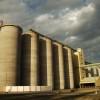 Los contratos de cebada cervecera 2016/17 permiten hacer fijaciones anticipadas con valores similares a los del trigo