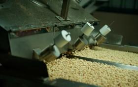El precio de exportación del maní blancheado argentino registró el nivel más bajo de los últimos tres años