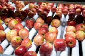El gobierno argentino logró levantar la suspensión del ingreso de peras y manzanas al mercado brasileño