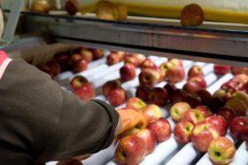 """Etchevehere: """"Ya estamos en condiciones de reiniciar el comercio de manzanas y peras argentinas con Brasil"""""""