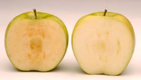 Biotecnología: EE.UU. aprobó la producción de dos variedades de manzanas modificadas que no se oxidan al cortarse