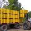 Extienden hasta mayo de 2020 la suspensión de juicios de ejecución fiscal para productores patagónicos de peras y manzanas