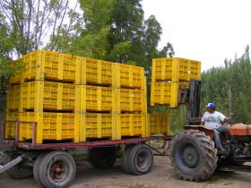 A partir de 2020 todas las empresas productoras de frutas deberán acreditar el cumplimiento de Buenas Prácticas Agrícolas