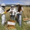Derrumbe de las exportaciones argentinas de miel por la doble imposición de retenciones directas y cambiarias