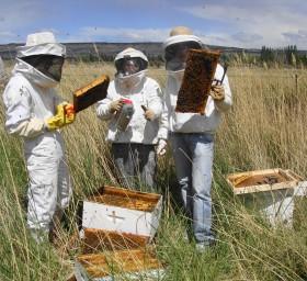 Comenzaron a recuperarse los precios internacionales de la miel: también la capacidad de pago de los exportadores argentinos