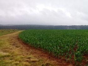 Quieren que la provincia de Misiones siga los pasos de su vecina Santa Catarina para transformarse en una gran productora de maíz