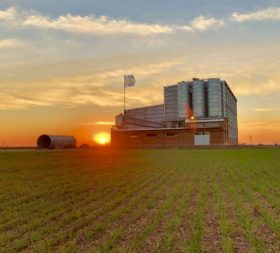 Novedad: este año los molinos aprenderán a la fuerza a realizar una gestión profesional de la originación de granos