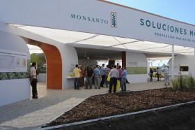 """Teléfono para Monsanto: Agroindustria solicitó """"a todos los actores de la cadena"""" respetar la normativa vigente en el país"""