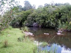 La multa por talar bosque nativo en Uruguay ahora es de 12.500 u$s/ha: también habrá castigo de vergüenza pública