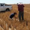 """""""Al menos un 30% de la producción argentina de maíz se generó a partir del efecto de la napa"""""""