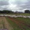 En el mercado chileno de carne este año la final se juega entre Brasil y Paraguay: Argentina no clasificó