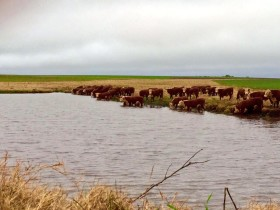 Esta semana se prevén acumulados de precipitaciones de hasta 90 milímetros en la Cuenca del Salado