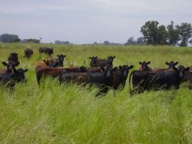 Un país sin kirchnerismo: el stock bovino uruguayo alcanzó un récord histórico
