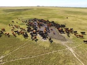 Qué lento que va la cosa: en el último año el crecimiento estimado del stock bovino argentino fue de apenas 1,6%